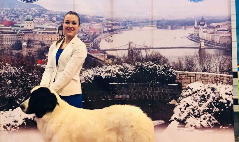 FeHoVA Winter Dogshow Budapešť Maďarsko 15. – 18.2.2018